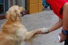 Dog shaking hands